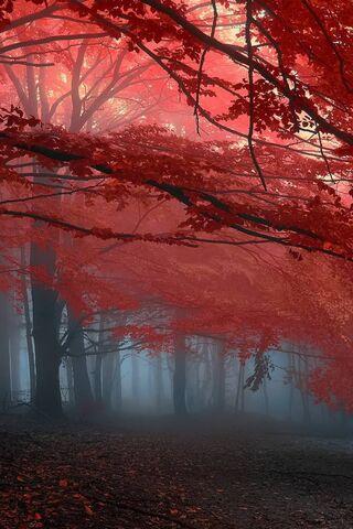 रेड-लाइट वन
