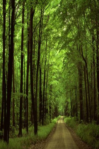 वन रोड