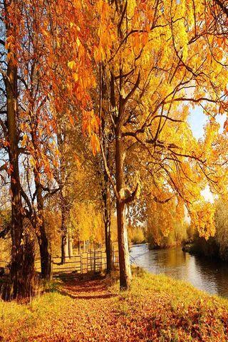 foto de Forêt automne jaune Fond d'écran - Télécharger sur votre mobile ...