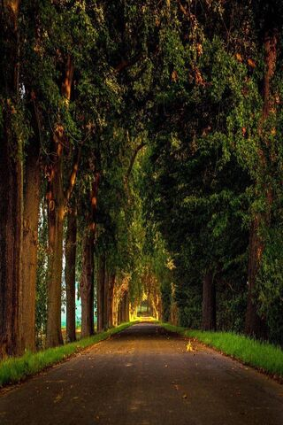 Road Nature Forest