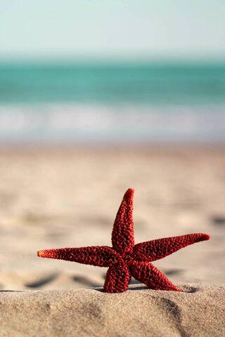 लाल सितारा मछली