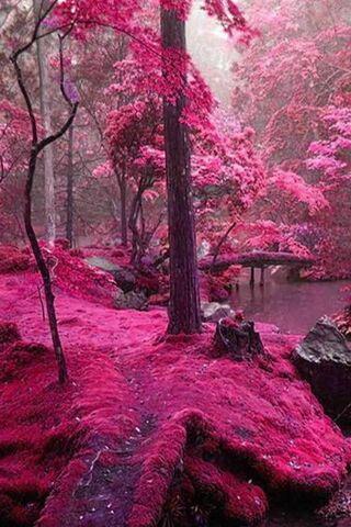 الطبيعة الوردية