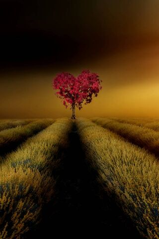 Drzewo miłości