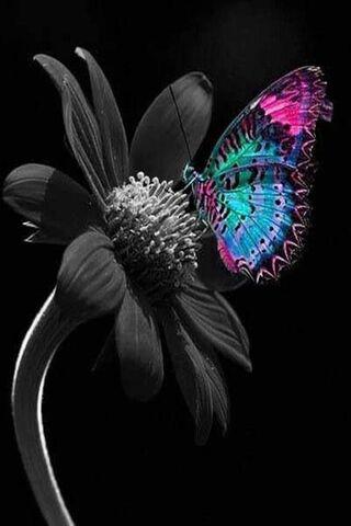 फुलपाखरू आणि फ्लॉवर
