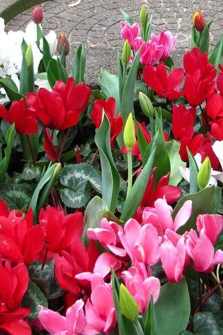 Квітневий розквіт
