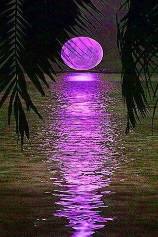 Paradis pleine lune