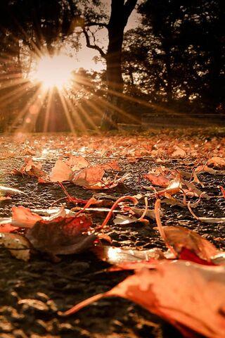 Phoneky جديدة وشعبية Fallen Autumn Leaves Hd خلفيات