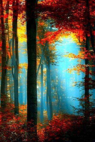 أشجار ملونة