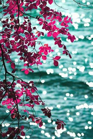 Güzel yaprakları