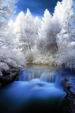 जल वन
