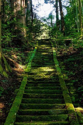 Nature Green Road Hd