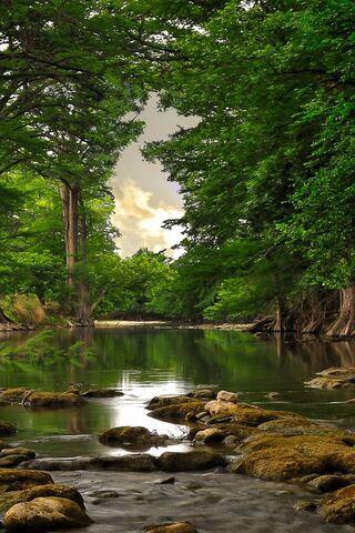 वन तालाब