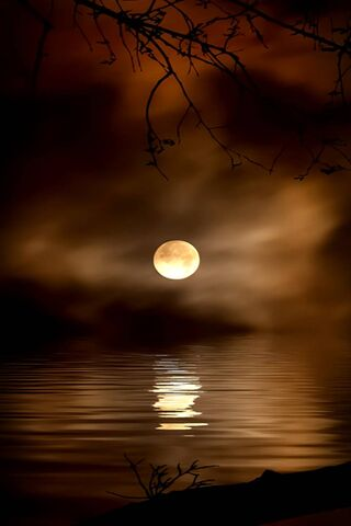 Golden Moonlight