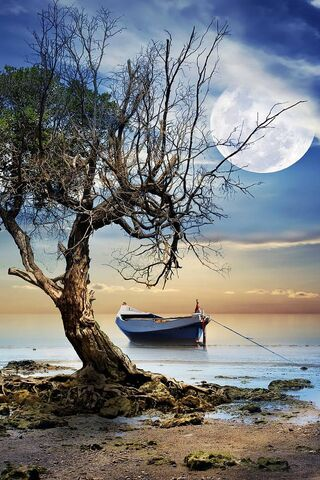 Moon Sea Boat Tree