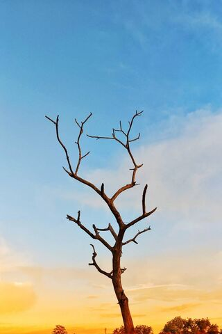 سماء المساء