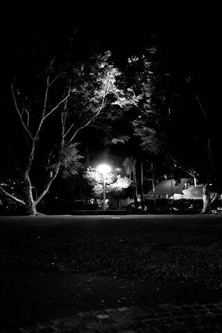 Black White Light