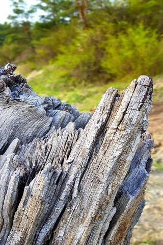 Salted Tree