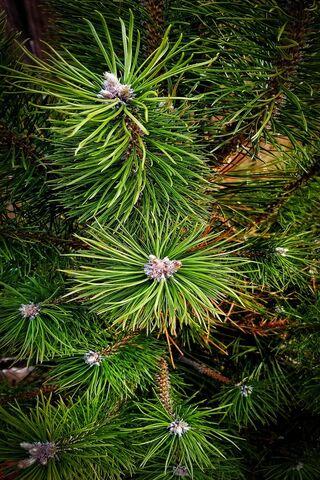 हरे पेड़