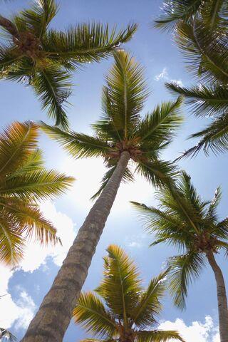 Palmiers Soleil