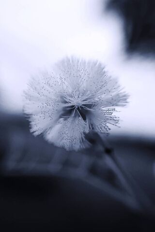 Fleur blanche noire