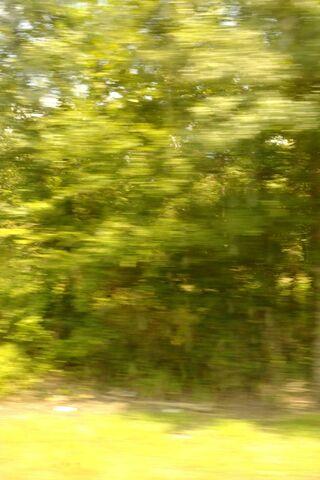 Blurred Greenery