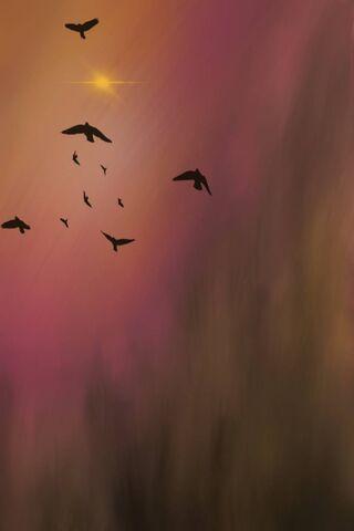 Phoneky الطيور المهاجرة Hd خلفيات