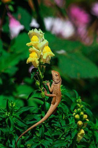 Flower and Chameleon