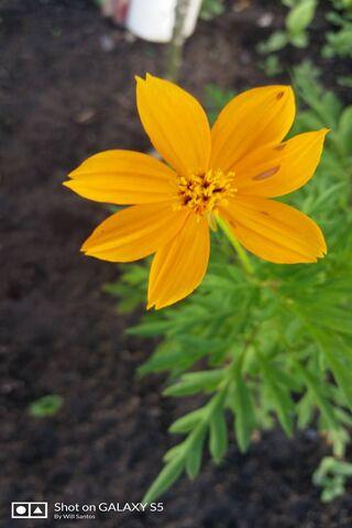 자연의 꽃