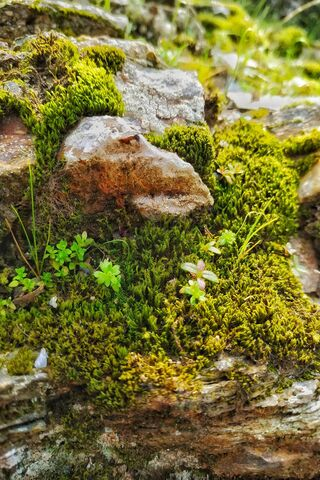 Rocks and Mosses