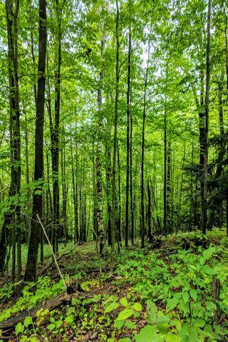 Znajdź las