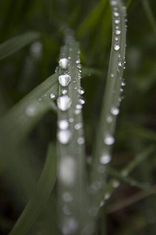 قطرات المطر على العشب