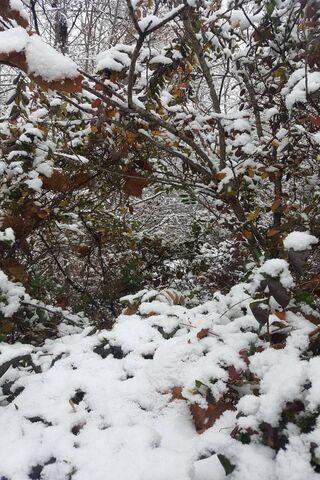 Snowy Las