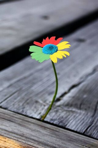 क्रोम फूल