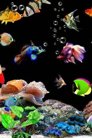 Aquarium N