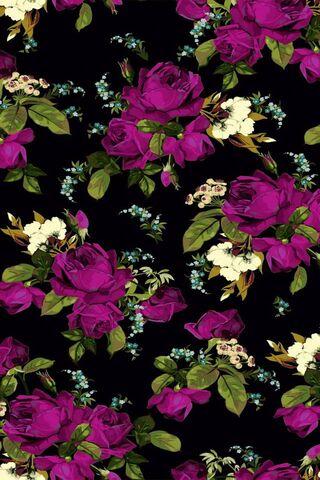 Hoa hồng mẫu