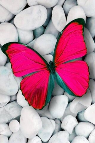 Różowy motyl