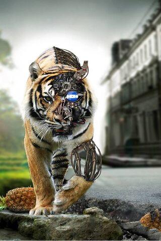 Tigre ฮอนดูรัส