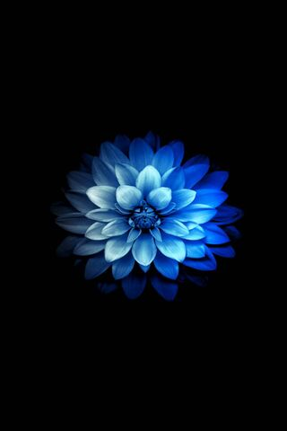 अदृश्य फुलर