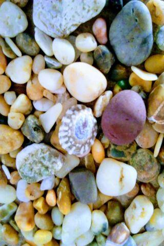 Shells Rocks