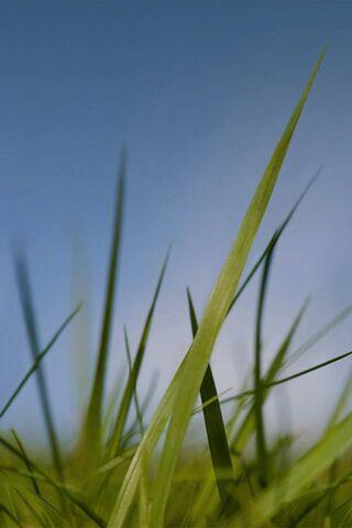 Nokia Grass and Sky