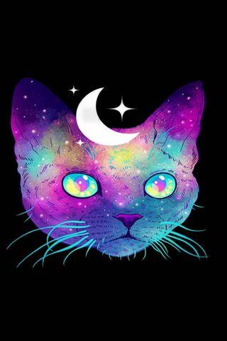 Kucing angkasa
