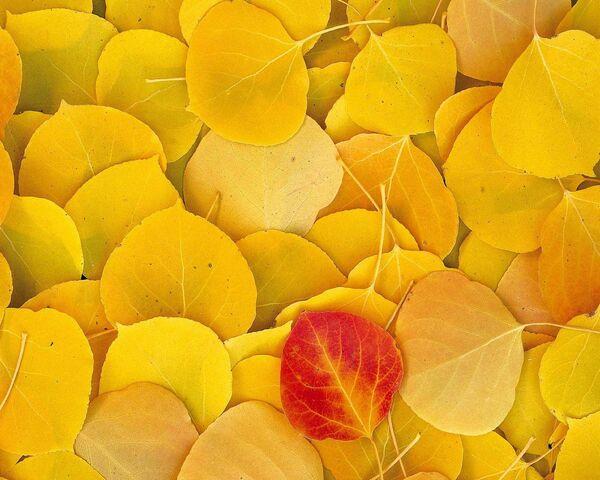 foto de Feuilles jaunes Fond d'écran - Télécharger sur votre mobile depuis ...