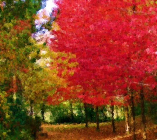 foto de Beau jour d'automne Fond d'écran - Télécharger sur votre mobile ...
