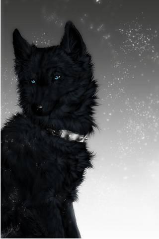 Black Wolf (Wit