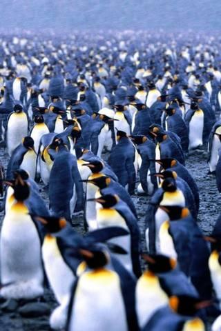 Penguin Artik