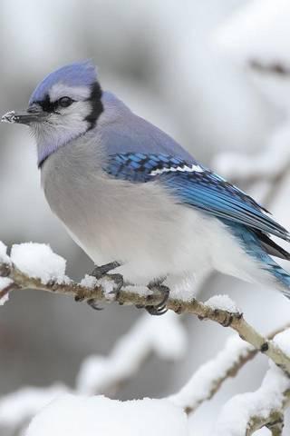 Burung Cantik