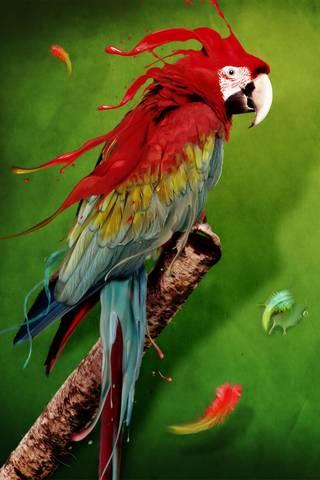 Burung Parrot Apple