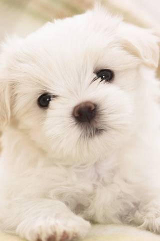 Pup adorable