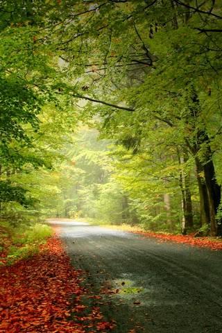 शरद ऋतु का रोड