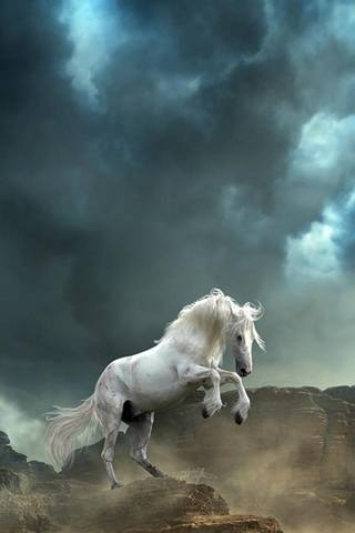 Wama Horse
